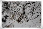 冬季雪景:normal_1201799243