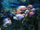 熱帶魚:2008918_f17385896fe339afe17f5d755f1a9ca4