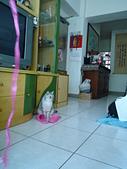 0814:小咪照片20090814 027