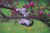 可愛動物:gl0133