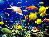 熱帶魚:colorcool_11510