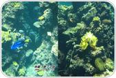 熱帶魚:49c0bd78376ce