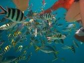 熱帶魚:IMG_9254