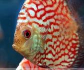 熱帶魚:1760907454303195905