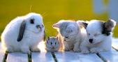 可愛動物:20070208091237687