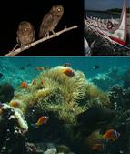 熱帶魚:55f10888