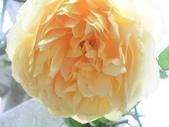 玫瑰:DSCN2183