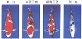 觀賞魚:B107-3-2005-10-30-11-53-20-3
