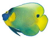 熱帶魚:2008040416160466