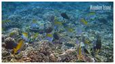 熱帶魚:6aed9c28