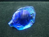熱帶魚:BS-0704B-%E7%86%B1%E5%B8%B6%E9%AD%9A