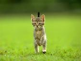 可愛動物:cat008.gif.jpeg