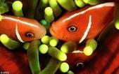 深海魚類:xinsrc_32202052616137031589810