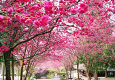 寒帶花卉:027