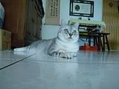 0814:小咪照片20090814 171