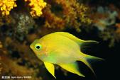 熱帶魚:2008416102533409_2