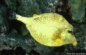 深海魚類:yinglinyu_23576