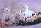可愛動物:gl0132