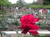 玫瑰:6fbb248d.jpg