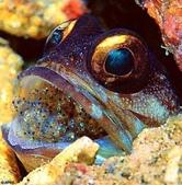 深海魚類:xinsrc_33202052616138593219712