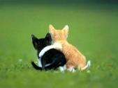 可愛動物:20070208091120405