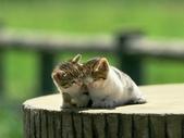 可愛動物:cat001.gif.jpeg