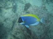 熱帶魚:114571ebccf