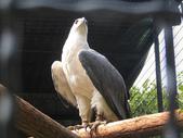 台灣鳥類:p04_10