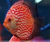 熱帶魚:4522176975834652978