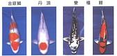 觀賞魚:B107-3-2005-10-30-11-53-20-2