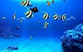 熱帶魚:04