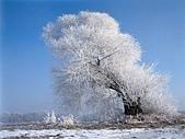 冬季雪景:Xuejing11