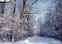 冬季雪景:images