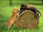 可愛動物:cat003.gif.jpeg
