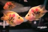 熱帶魚:001558d998c80b00b4ca02