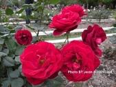玫瑰:ac581fb4.jpg