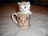 可愛動物:kittycup