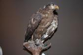 台灣鳥類:IMG_2681