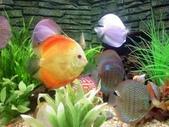 熱帶魚:0035110