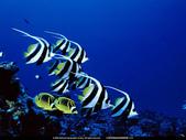 熱帶魚:xin_412010426130450011260129