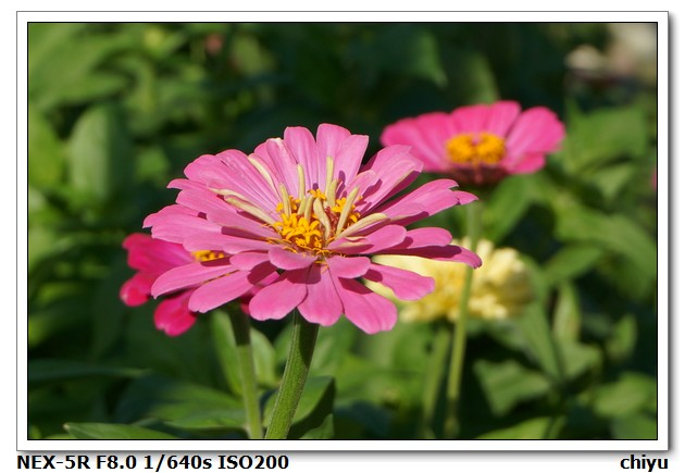 花的種類:DSC01370.JPG