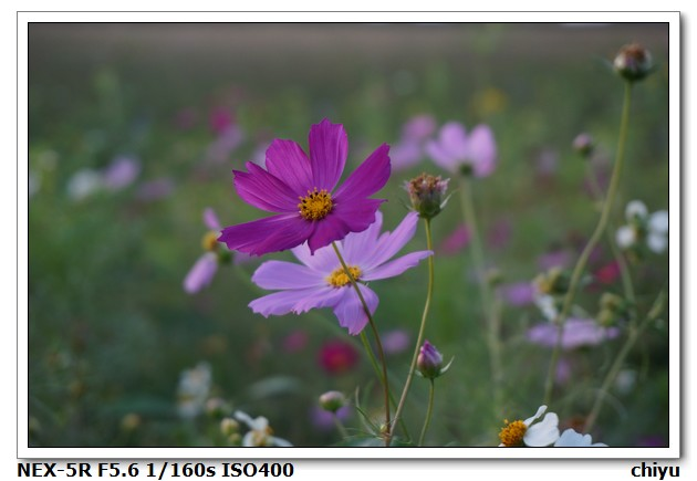 花的種類:DSC01402.JPG