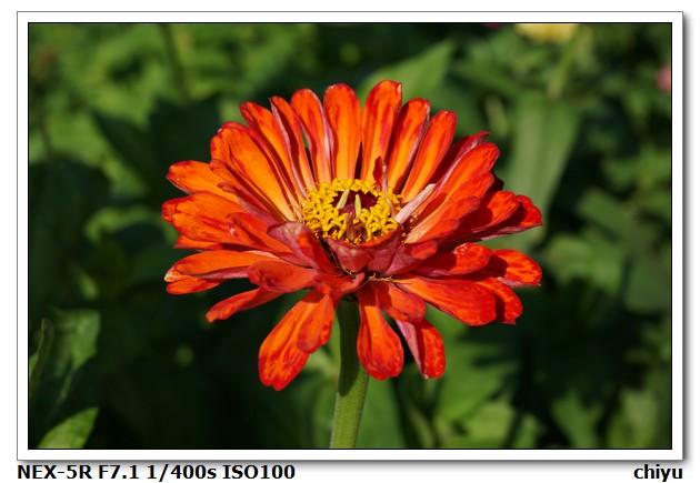 花的種類:DSC01380.JPG