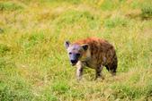 東非:hyena3_r.jpg