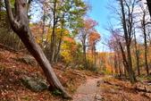 Shenandoah,仙納度國家公園:Fall5.JPG