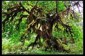 華盛頓州:國家公園:1968092229.jpg