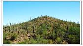 Saguaro, Meteor Crater 2010.09:1477540638.jpg