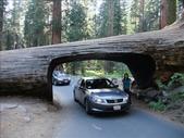 紅杉及國王谷國家公園 2009.09:1703030612.jpg