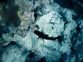 東非:fish7_r.jpg