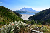 夏。雷尼爾國家公園與聖海倫火山:Helens6.JPG